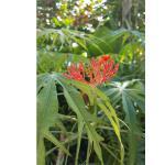 coral plant